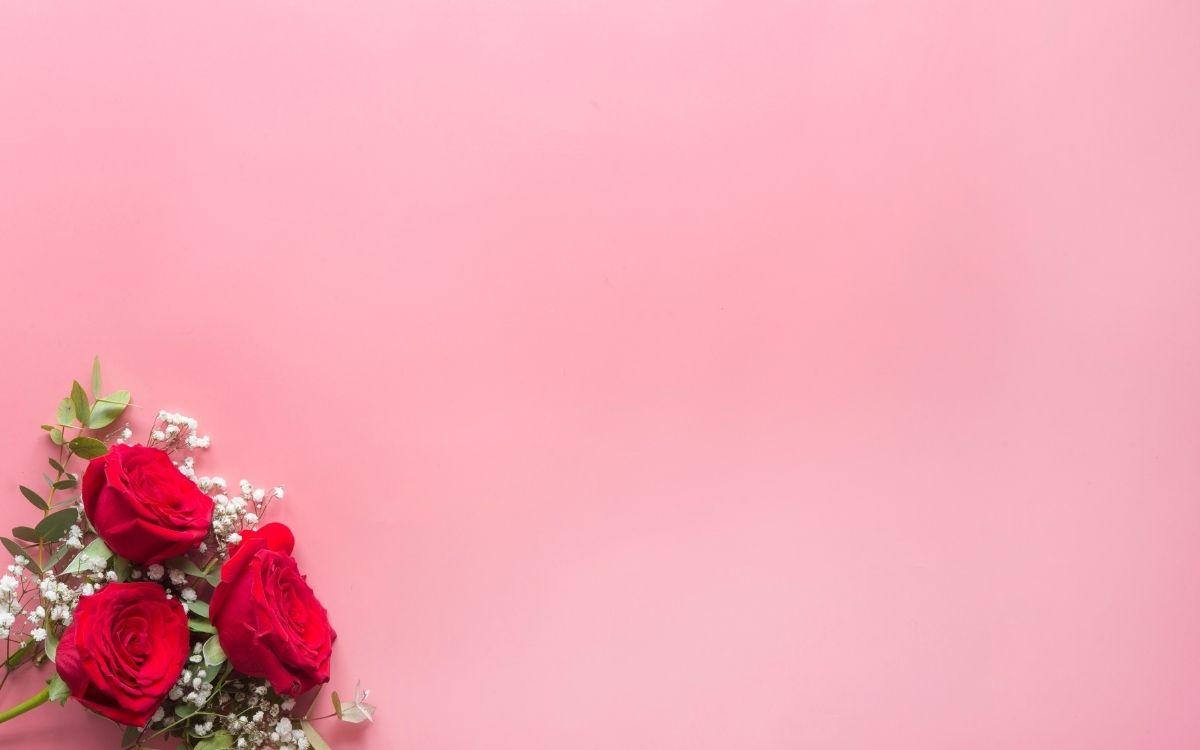 ピンクの背景と薔薇