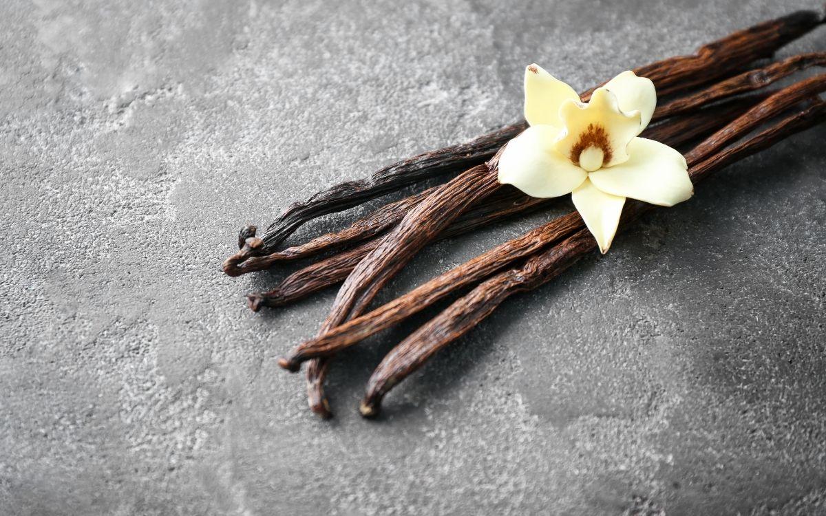 バニラビーンズと白い花